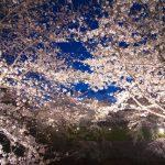 夜空とのコラボが素敵!夜桜ライトアップが観れる京都のお花見スポット