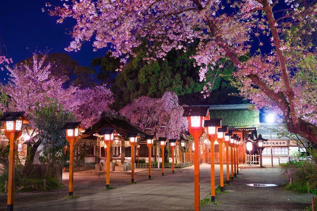 平野神社 桜 ライトアップ 画像