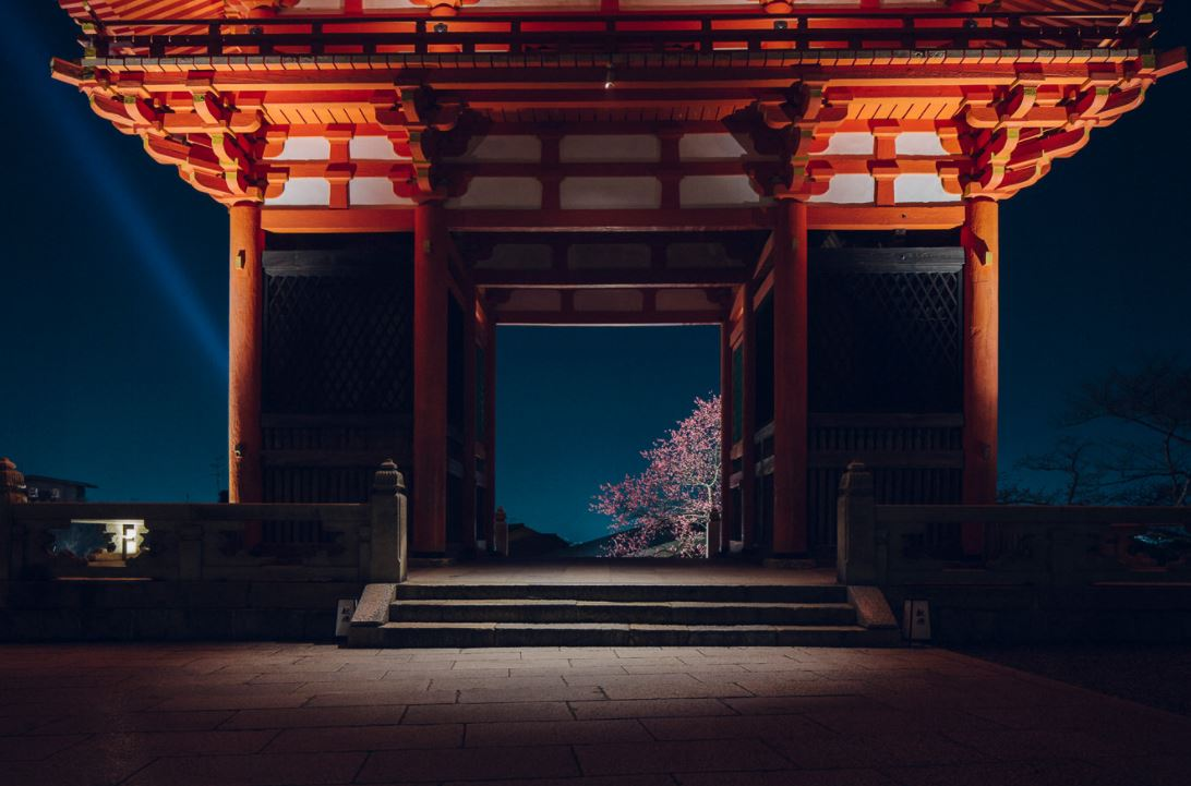 清水寺 桜 ライトアップ 画像